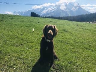 Obi loves mountain walks
