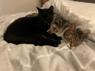 More cuddles