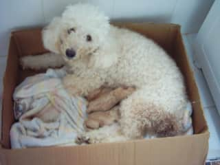 Sacha and her puppies.