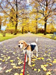 Ginger on a walk in Zug