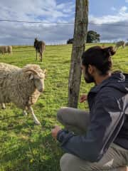 The donkey was less interested in the long stalks of grass we were offering (Puerto Varas, Chile - November 2019).