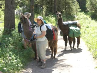 Llama trip to Yellowstone, with my friend's llamas.
