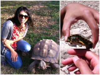 Turtles are friends!