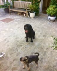 Jazz , Charlot + Foreman ( Francoise's dogs) in Montepilloy near Paris 2018