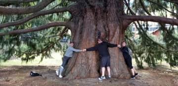 And yes, I am a tree hugger!!!