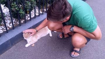 Cat in Melbourne.
