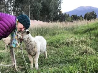 Leigh with Clyde on a farm in Cuenca, Ecuador where we volunteered