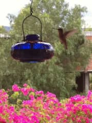 My garden and hummingbird feeder