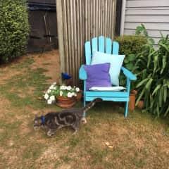 Barney chair
