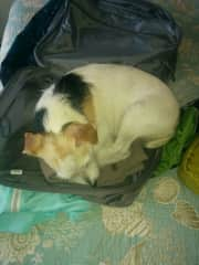 Rocket doesn't want me to pack to leave without him, Florida house sit.