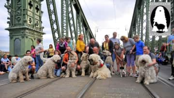 Komondor ( Hungarian breed) Rescue Foundraising Event