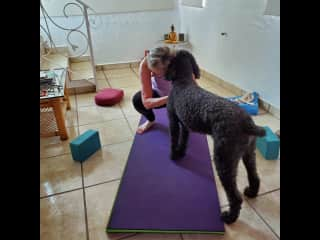 Teddy helping me with my yoga practice.  He's very good at downward dog!