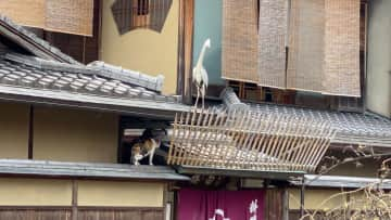 """We both know cats are almost always the safe bet, as they are stealthy little tigers inside and out.  But it's easy to see who was the """"winner"""" here, and the heron found it all very amusing.  So did Oskar!"""