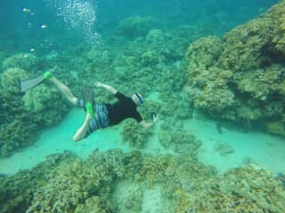 Buddy snorkeling in Hawaii and snapping a photo of a sea turtle!