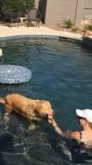 Pool time with Bob in AZ