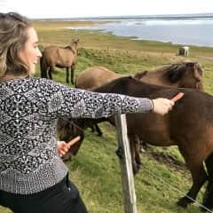 Feeding the beautiful horses in Iceland :)