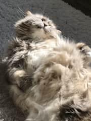 More tummy rub please!