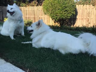 The pups in the backyard