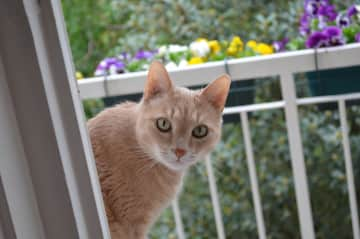 Cat Zuca was with us for 11 years