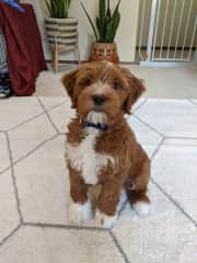 Puppy Rainier!