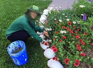 Diane caring for the historic flowerbeds on Michigan Island in the Apostle Island National Lakeshore, volunteering as a USA National Park Volunteer.