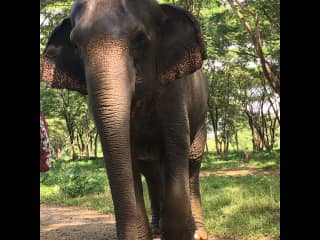On our trip to Thailand. We spent a couple days at the elephant sanctuary. Amazing experience. It was such a blessing to be in their presence.
