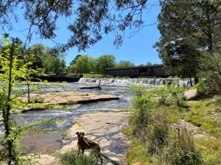 Luna at Watson Mill Bridge - she is a great trail dog