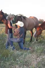 Our horses helping with our proposal