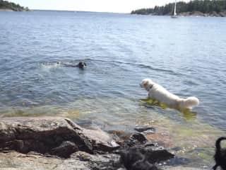 Swim time !