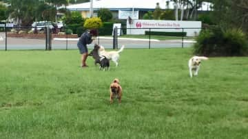 At the dog park with Jess, Chloe and minion