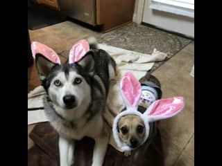My grandpups at Easter