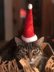April likes Xmas trees. Santa hats, not so much.
