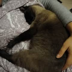 Mia for night cuddles