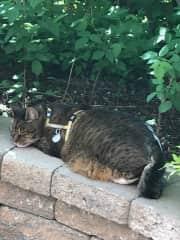 Kush enjoying the garden.