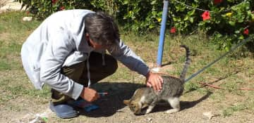 me with a campsite cat in morocco Feb. 2020