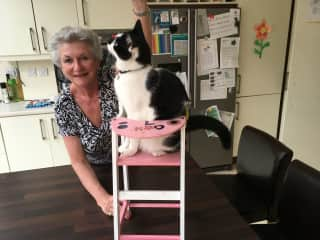 Kibby in Dublin was trained to jump into the high chair for her treats!