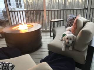 Birdie enjoying the fire pit on the wrap-around screened porch.