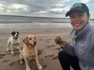Pet sitting Alfie and Sandy in Dingle, Ireland