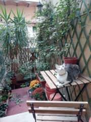 Ginga on Terrace