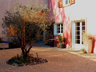 The olive tree in the courtyard, Spring 2021