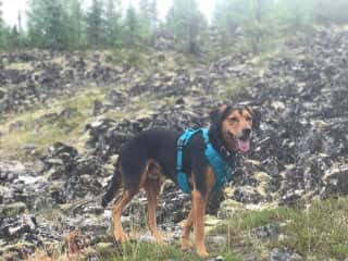 My best friend's pup, Konrad when we all hiked through Alaska together.