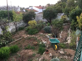 This is the garden in front of my home in Portugal, that hadn't had any attention for twenty years.  Every day I uncover something new, and it has been a fun project that has helped me bond to a new country and home.