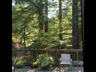 Outdoor deck with redwood trees.