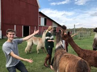 Our Llama farm. The Willowicke Inn in Williamston, MI. :) Google search it!