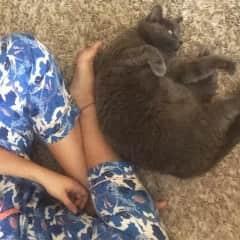 "Beloved family cat ""Cattie""."