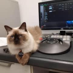 Kush at work