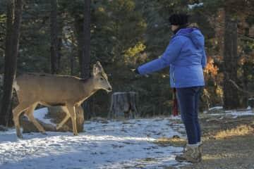 MaryO feeding deer in New Mexico