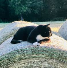 One of our cats: Total overview on the hay bale!