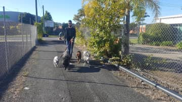 Jack walking the dogs :)