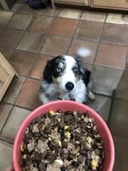 Belle making sure she gets her dinner.